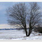 Monatsbäume – Januar