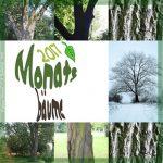 Monatsbäume – ein Fotoprojekt rund ums Jahr