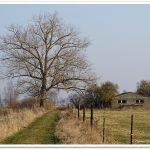 Monatsbäume – Februar