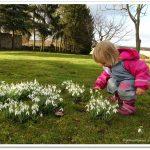 Frühlingsgrüße und ein ZiB