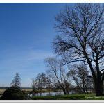 Monatsbäume – März