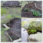 von Vorlieben und Vorbereitungen für den (neuen) Garten