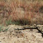 Sandlandschaften – einfach, schön und sehr belebt