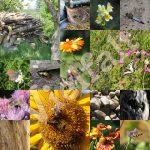 von Gartenkonzepten, Kreisläufen und Vielfalt