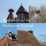 Osterausflug ins Storchendorf Rühstädt