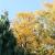phänologische Jahreszeiten - Spätherbst